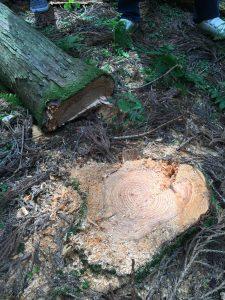 木のソムリエツアー第1回山を見る_09