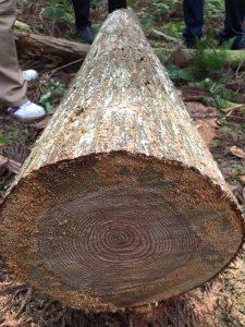 木のソムリエツアー第1回山を見る_10